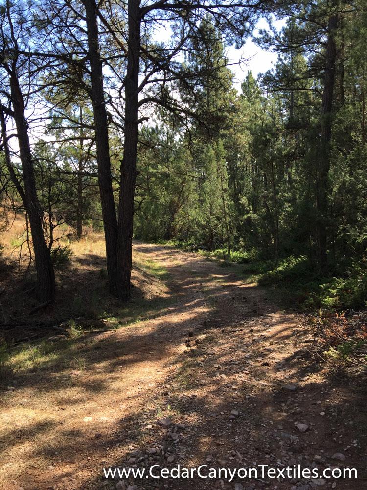 20-Year-Hike-2